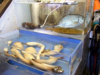 生簀に魚や貝類が入っています